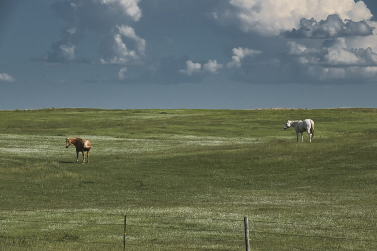Fine art photography prints | Grazing Before the Storm