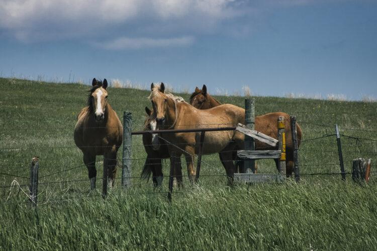 Fine art photography prints | Hillside Horses