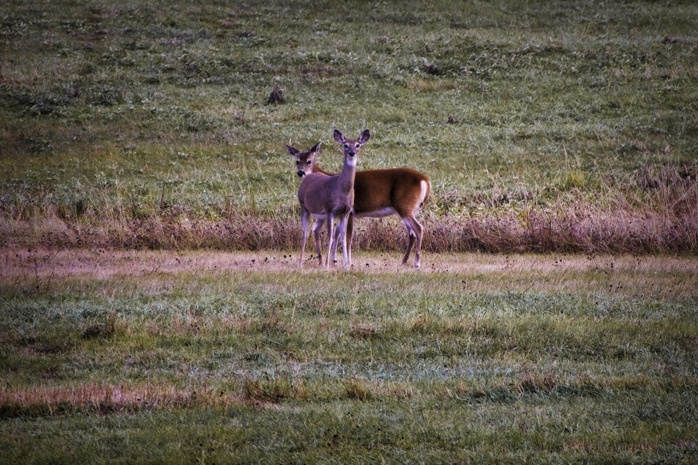 Fine art photography prints | Deer at Dusk