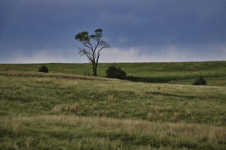 Fine art photography prints | Lone Tree Prairie