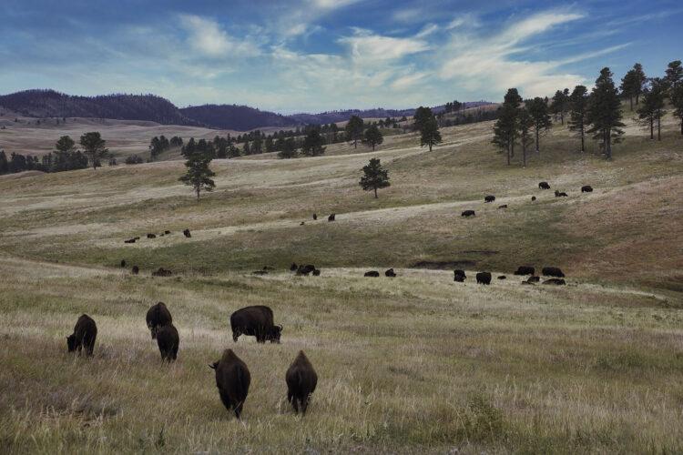 Fine art photography prints | Buffalo Valley