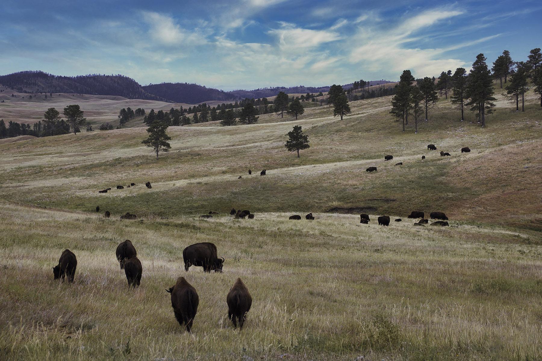 Fine art photography prints   Buffalo Valley